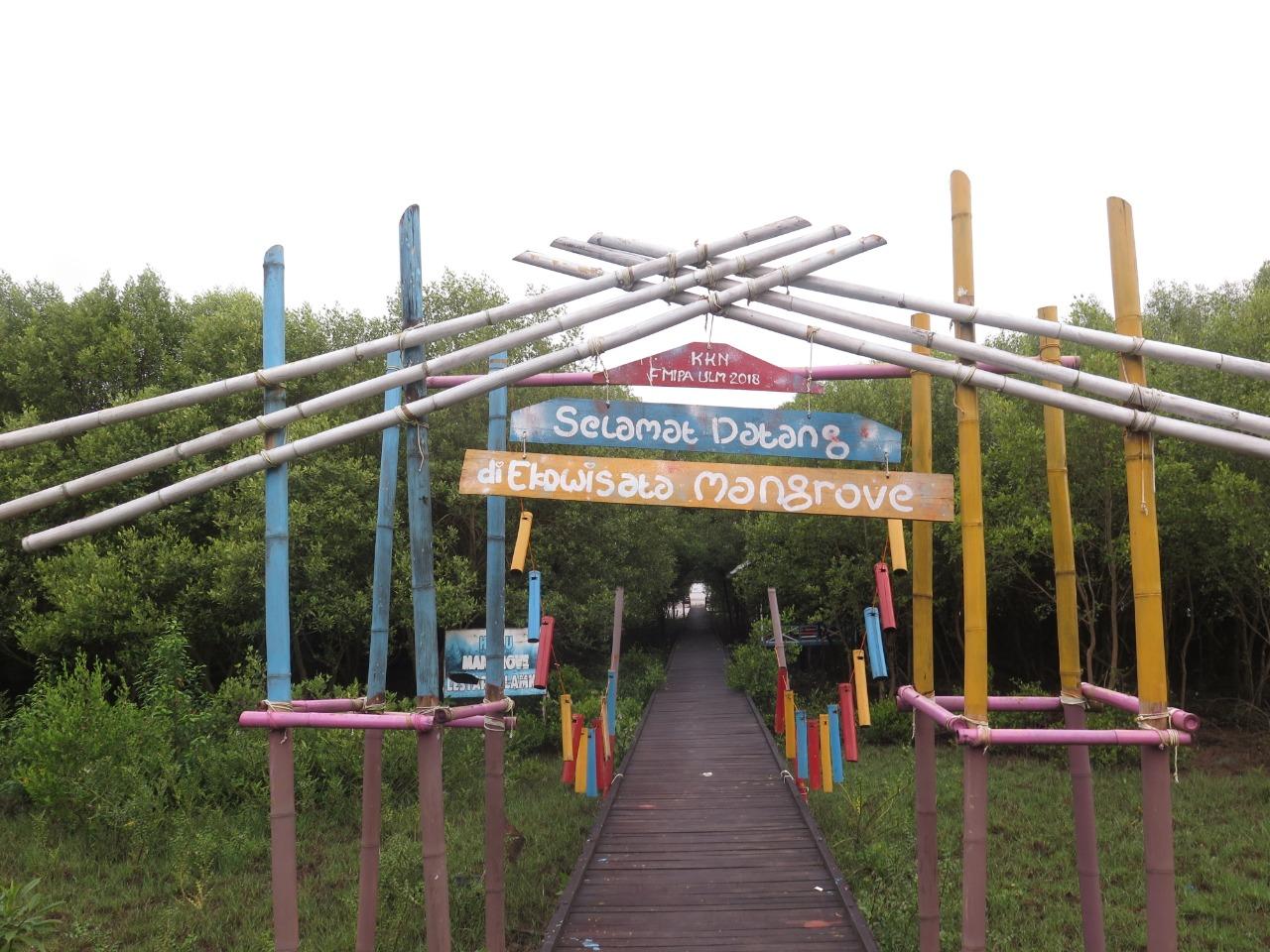 Kawasan Mangrove Mampu Serap Co2 Dalam Jumlah Besar Redaksi 8